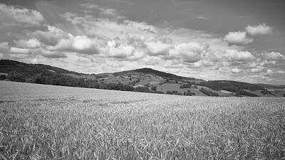 20200531 Savigny randonnée (Filtre vert) (/Saint-Romain-de-Popey/Auvergne-Rhône-Alpes/France - N45°49.046' E4°30.588' - Altitude : 695.06m)