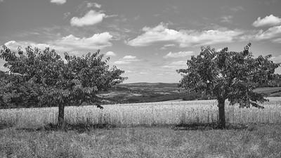 20200531 Savigny randonnée (Filtre vert) (/Saint-Romain-de-Popey/Auvergne-Rhône-Alpes/France - N45°49.901' E4°33.009' - Altitude : 453.53m)