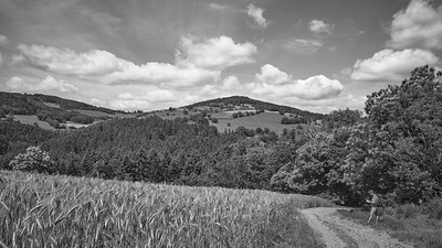 20200531 Savigny randonnée (Filtre vert) (/Saint-Romain-de-Popey/Auvergne-Rhône-Alpes/France - N45°49.224' E4°30.244' - Altitude : 633.27m)