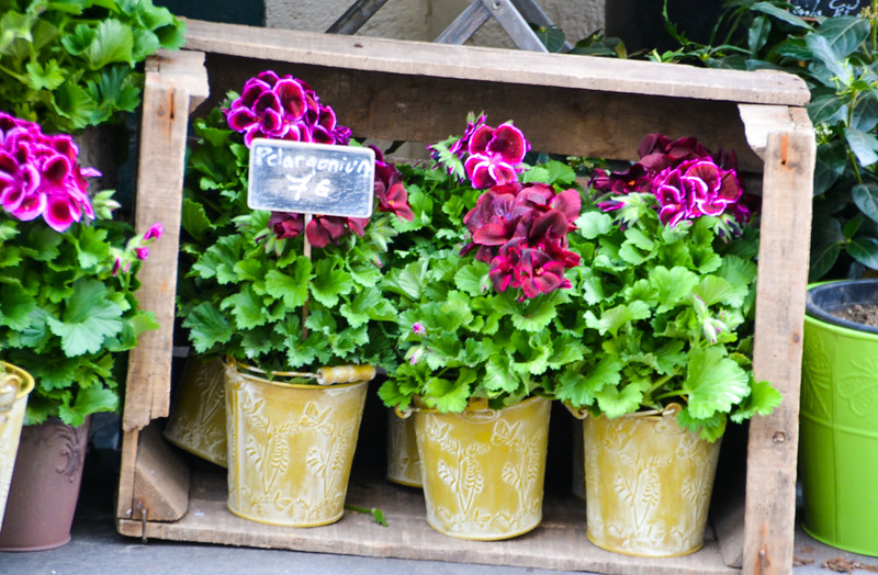 Potted Plants For Sale<br /> Paris