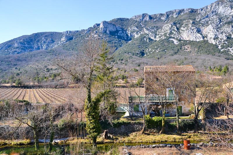 Vineyard<br /> Saint-Jean-de-Buèges<br /> Languedoc-Roussillon, South France