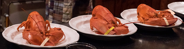 ahearn_lobster-3524.jpg