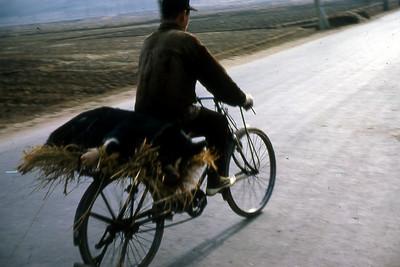 Korean man on bicycle