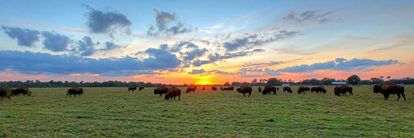 Where the Buffalo roam.