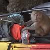 1 Travel to Bangkok feb 28