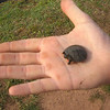 Baby turtle @ Watermarks Camp