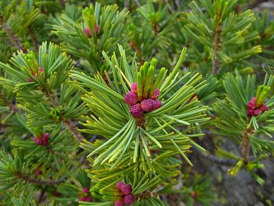 Beautiful little pine cones.