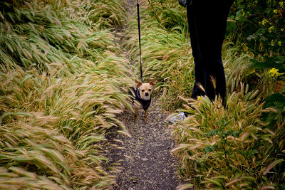 Lola on the trail