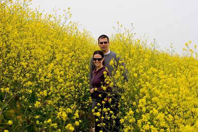 Yellow mustard is pretty tall