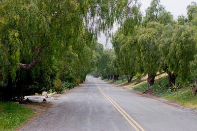 Pepper Trees street