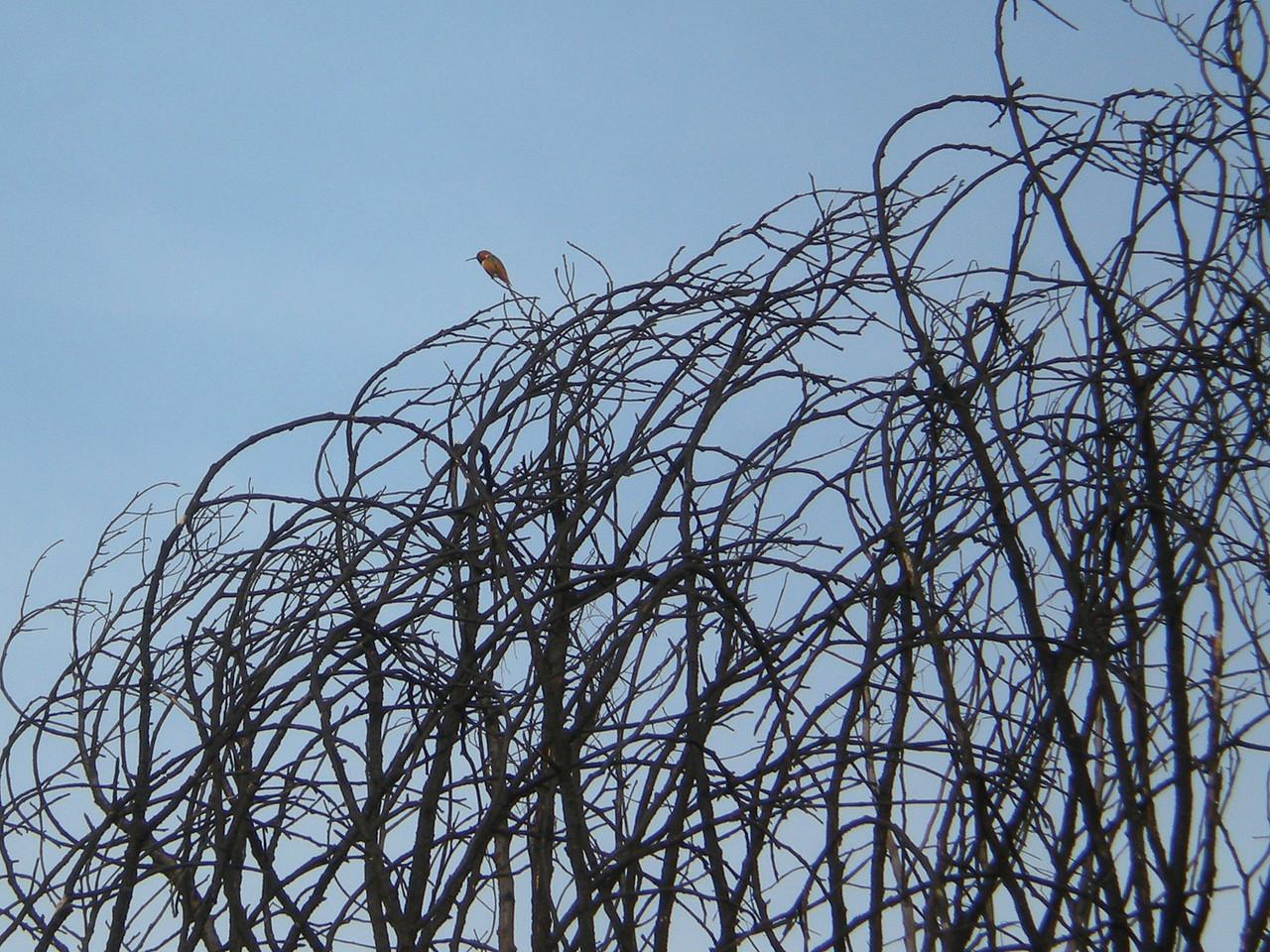 Hummingbird on the watch.