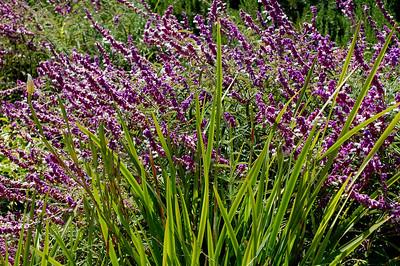 Beautiful flowers on Trump National golf Course, Palos Verdes Peninsula, CA