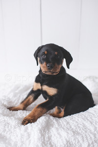 JLS_Pet Photography_013