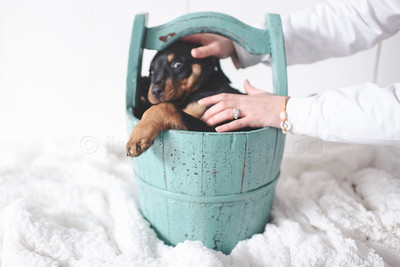 JLS_Pet Photography_028