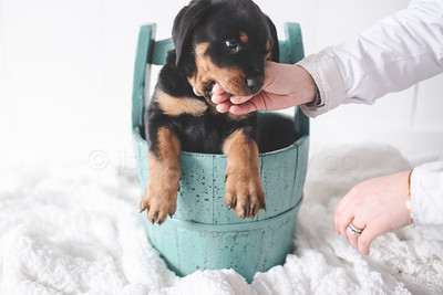 JLS_Pet Photography_025
