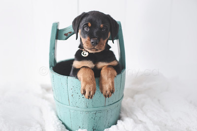 JLS_Pet Photography_030