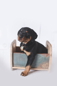 JLS_Pet Photography_004