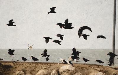 Boat Ramp Birds SketchedPIX