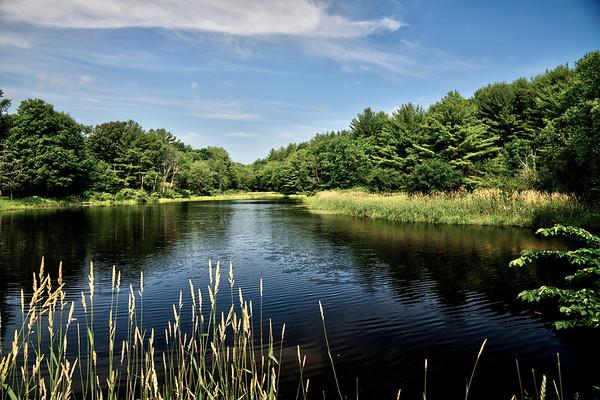 Joint Grass Pond