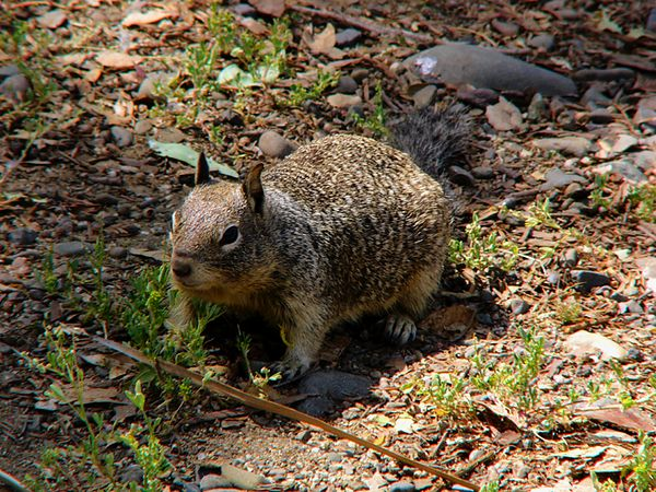 squirrel_P1140463