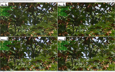 Top FZ50 - RAW Left - JPG Right - Bottom FZ1000 - RAW Left - JPG Right