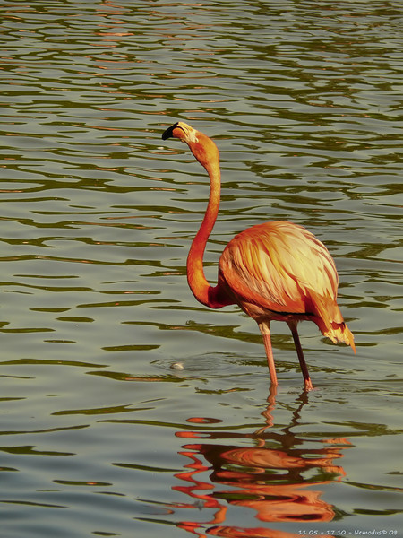 Flamant rose<br /> - F5.0 - 1/200 - 380mm - 100 ISO