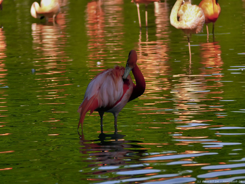 Flamant rose<br /> - F3.7 - 1/400 - 420mm - 200 ISO
