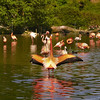 Flamants rose<br /> - F3.6 - 1/800 - 206mm - 200 ISO