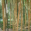 bamboo plantation parc - South France
