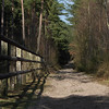 Forêt de Rambouillet<br /> F4.0 - 1/200 - 127 mm - 100 ISO<br /> RAW FZ50 - Format 16/9