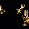 FZ50 - Lastours, Cathar Castle by Night (Sound and light)<br /> f/5.0 - 5s - 130 mm - 100 iso