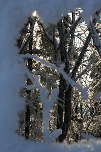 Frost og kulde mestrer hjorten godt som et naturlig dyr i vår fauna.