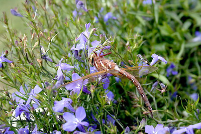 Sommer med yrende blomsterpryd og godt naturlig hjortebeie i kulturlandskapet.