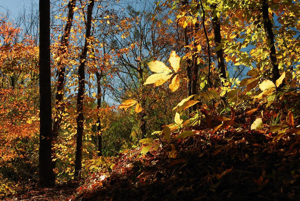 Opelofa Trail, Ocmulgee National Monument near Macon, GA (Bibb County) November 2008