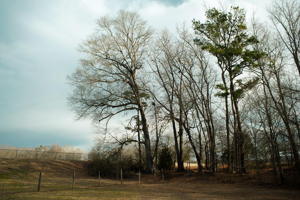 Sandy Creek Park, GA (Clarke County) February 2015
