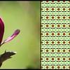 Purple Flower Dorrigo NSW
