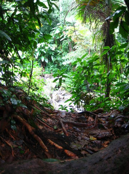 """more rainforest"""