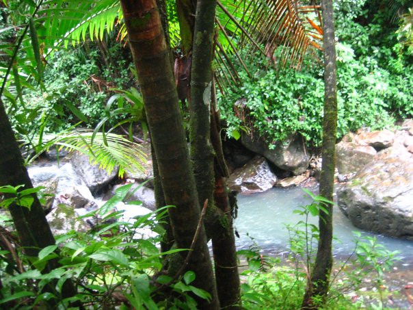 Inside the only rainforest in the United States.