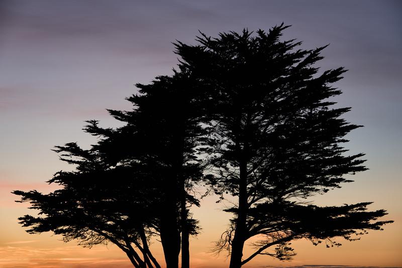 Backlit Cypress Tree