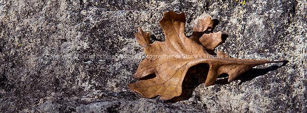 015-leaf-wdsm-19oct17-851x351-007-2345