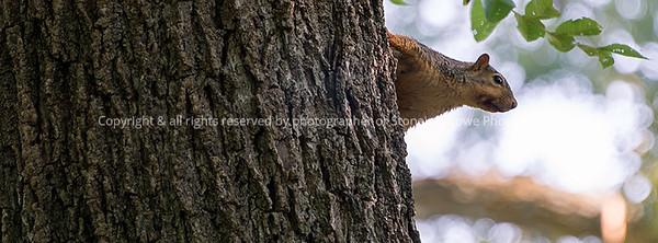015-squirrel-wdsm-30aug17-851x315-007-1202-fb