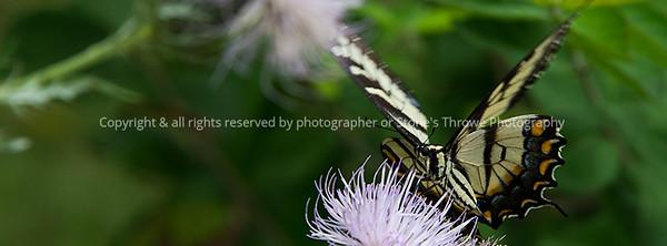 015-butterfly-wdsm-26aug17-851x315-007-0880
