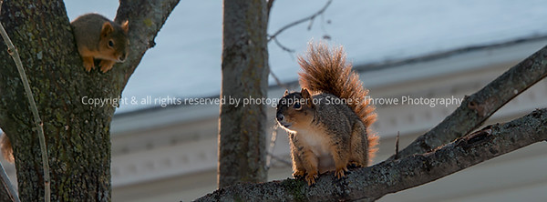 015-squirrel-wdsm-07jan18-851x315-007-3484