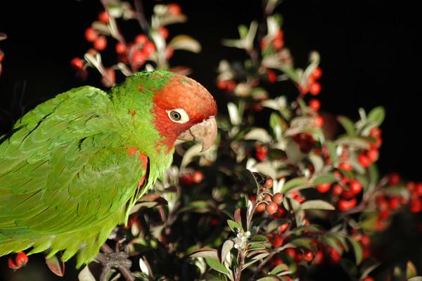 Parrots_17