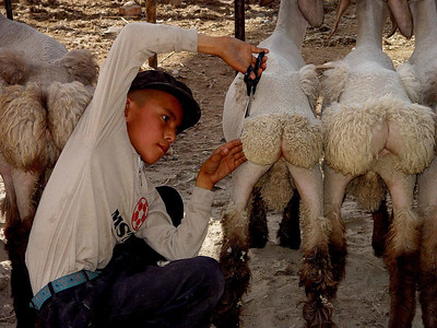 Trimming sheep Kashgar Bazaar DSC01831