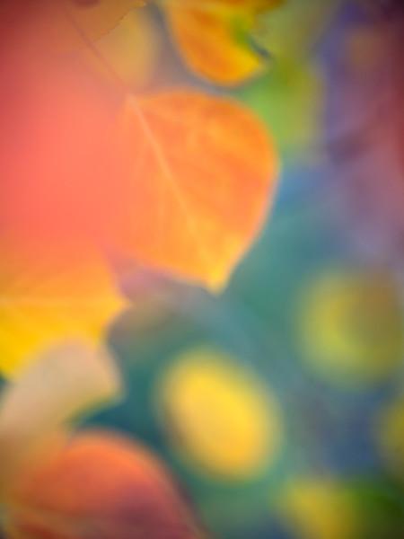"""""""Artist's Palette"""""""