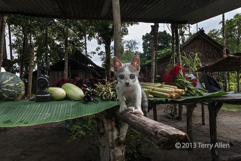 Kitten on beam, Fergusson Is, D'Entrecasteaux Islands, PNG