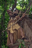 "Warrior shooting arrow from tree, Ekasup Village, Port Vila, Vanuatu<br /> <br /> Other photos of the warriors can be seen here: <a href=""http://goo.gl/gTo2p4"">http://goo.gl/gTo2p4</a><br /> <br /> 24/06/14  <a href=""http://www.allenfotowild.com"">http://www.allenfotowild.com</a>"