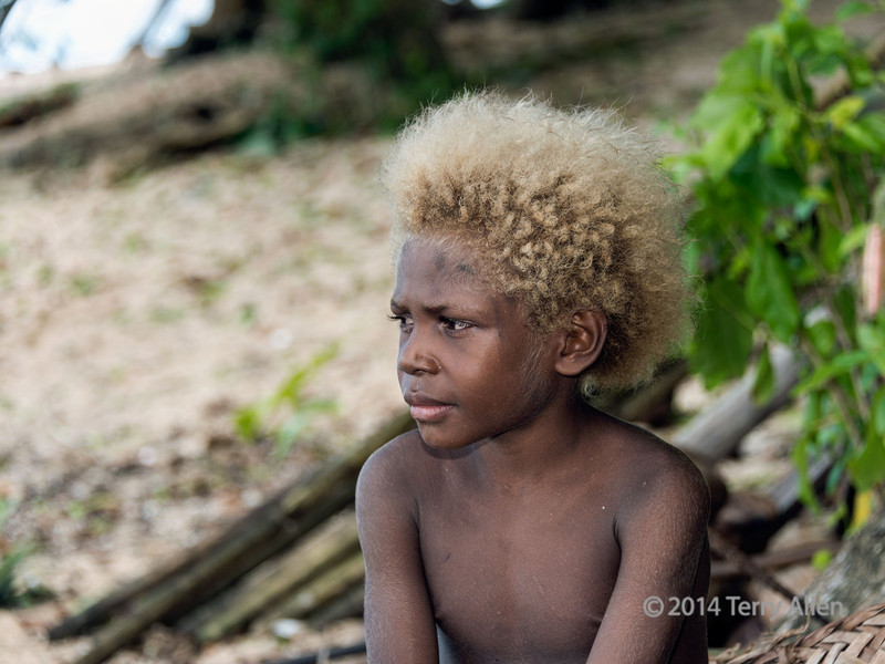 "Portrait of a boy carrying the TYRP1 gene for blond hair, Utupua Island, Solomon Islands<br /> <br /> A new study genetic study of the islanders (DNA sampling of their saliva) says the reason why a substantial number of Solomon Islanders are blond is due to simple genetics - a gene called TYRP1 that is unique to the Solomons and other parts of Melanesia. The gene is found in 26 per cent of the people from the Solomons.  TYRP1 is a recessive gene, which means that both the mother and the father need to pass a copy on to the child for the child to have blonde hair. This results in around 10% of children in Melanesia having blond hair. This mutation in the gene affects melanin synthesis. The gene is not related to the gene for albinism, which results in light coloured hair, eyes and skin due to the complete absence of pigment in the skin. This particular gene has a very strong effect on hair colour, and a much milder effect on eye colour and skin colour. Similar to blonde Europeans, as people grow older their hair gets darker. The gene is rare or absent outside of Melanesia.<br /> <br /> Other photos from Utupua Island can be seen here: <a href=""http://goo.gl/ntbUvv"">http://goo.gl/ntbUvv</a><br /> <br /> 6/2/14  <a href=""http://www.allenfotowild.com"">http://www.allenfotowild.com</a>"
