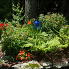 Annuals and perennials under tree in rasied garden bed